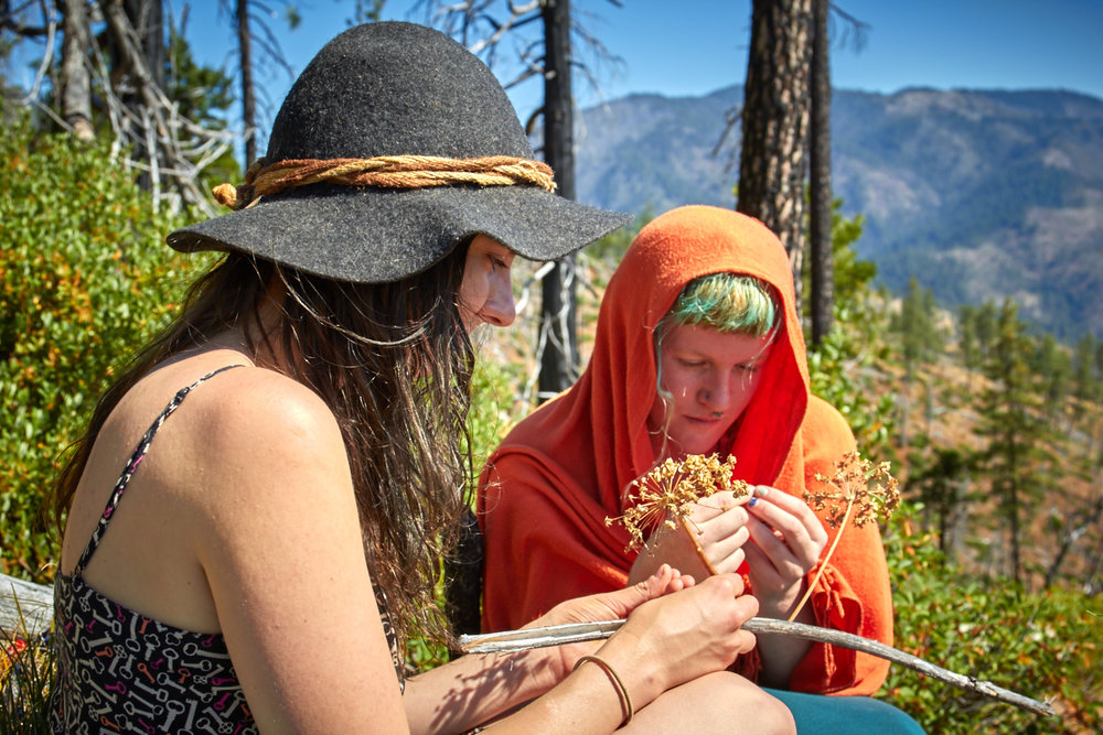Two herbal students key out sharptooth angelica, a member of the parsley family, in the Siskiyou Mountains of southern Oregon.  © Scott Kloos. 2015. All Rights Reserved.