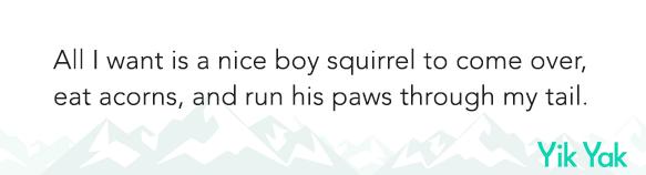 Squirrels3.png