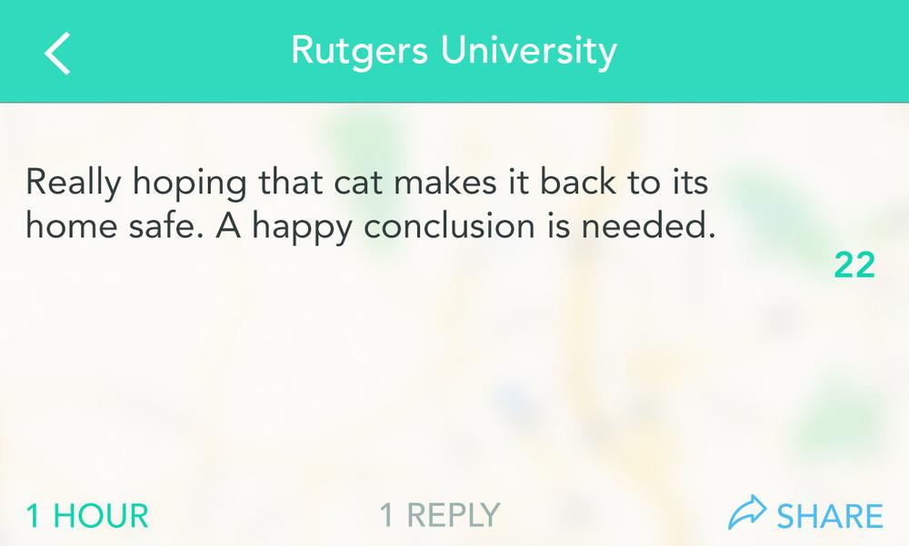 RutgersCat-4.jpg