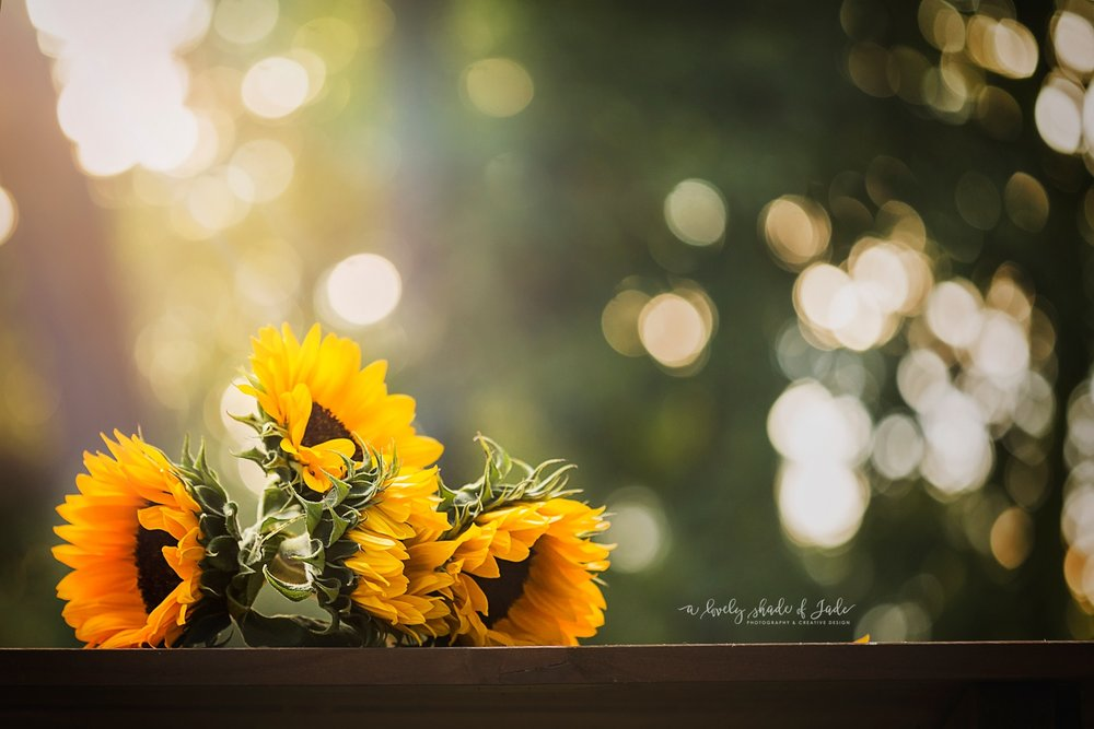 Sunflowers_Morristown_NJ_Photographer_0051.jpg