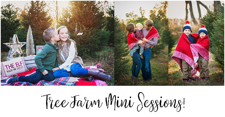 Tree Farm Mini Announcements | Mendham NJ — A Lovely Shade of Jade