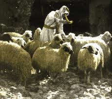 the Great Shepherd of the sheep