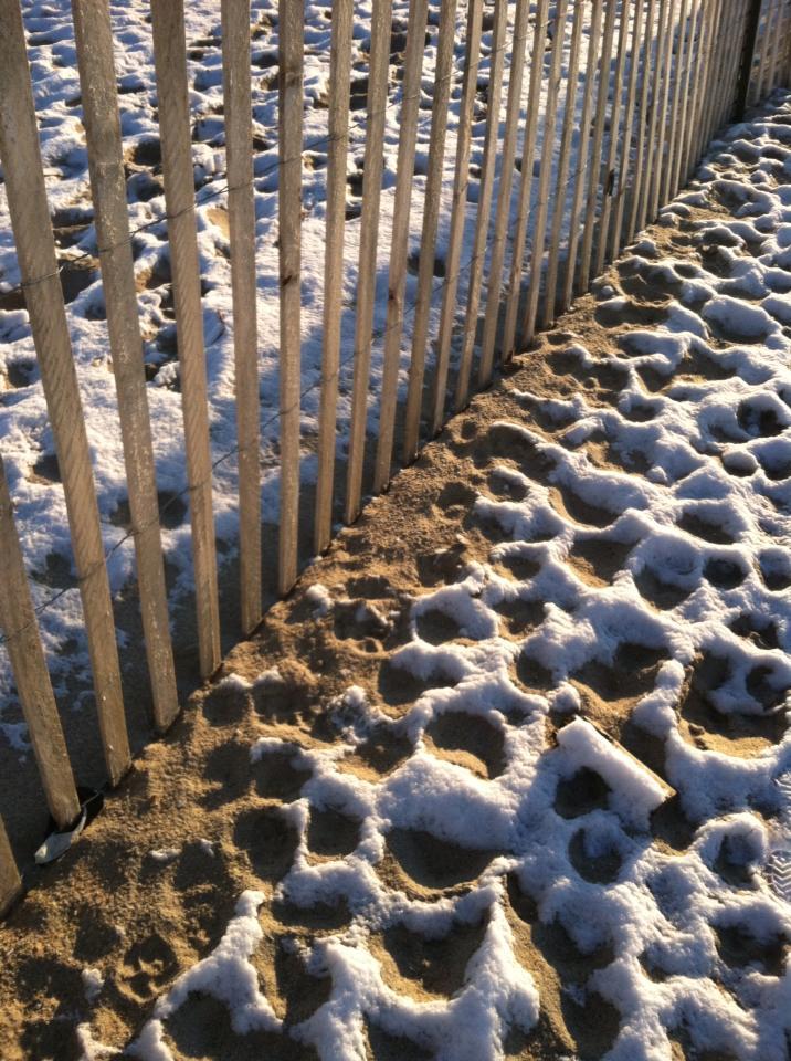 frozen sandfrozen sand