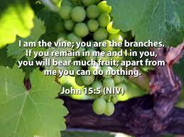 vine & branches