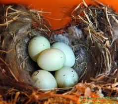 nest+of+eggs.jpeg