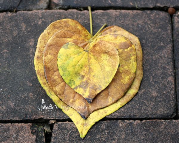 heart-shaped leaves.jpg