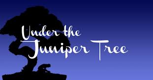 under the juniper tree.jpg