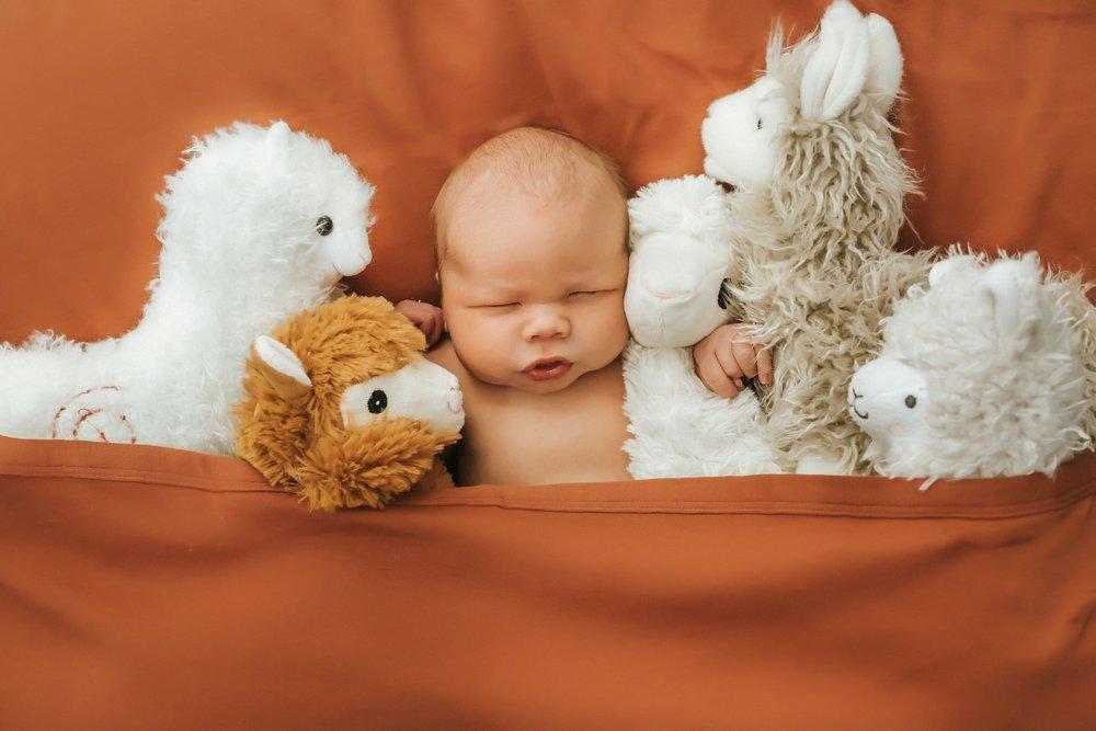 newborn photos fairfield