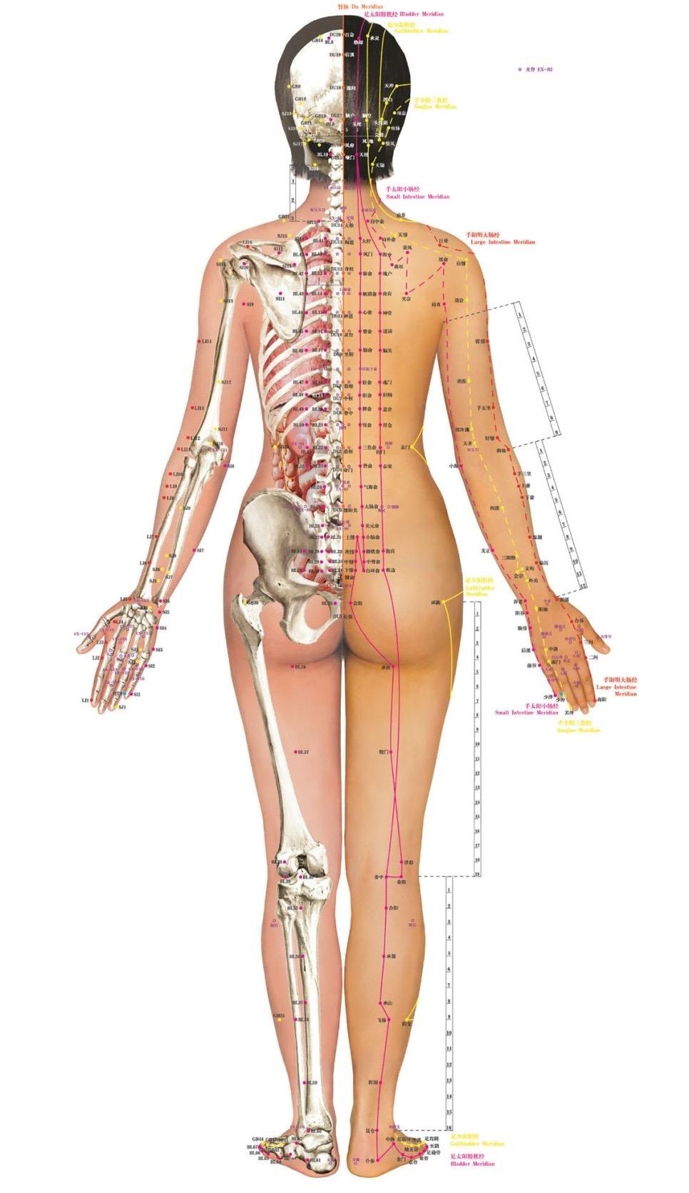 Acupuncture + Fertility — Spectrum Doula Collective