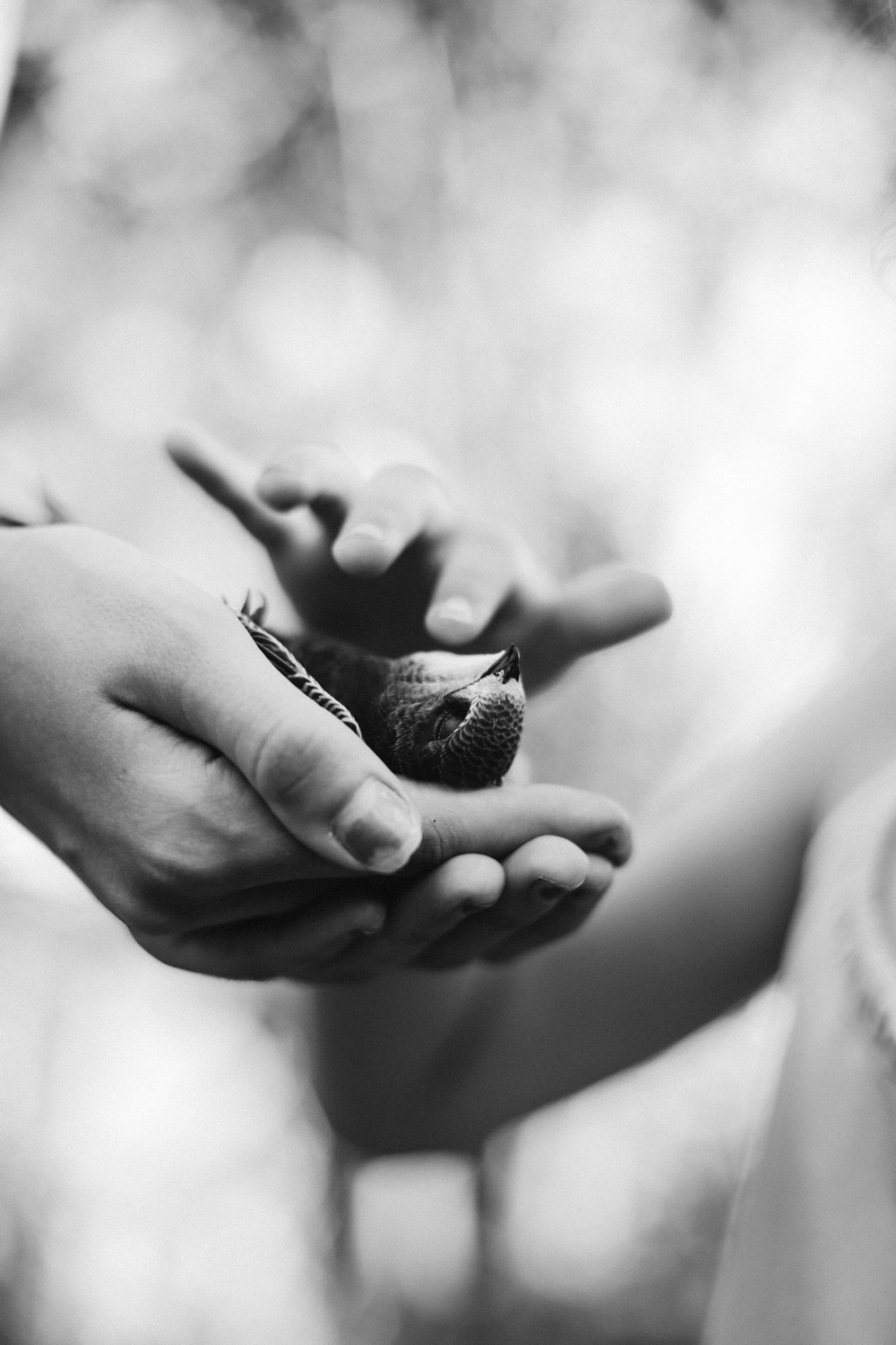 A mother's hand holds a wounded bird while the a child stokes the bird's neck