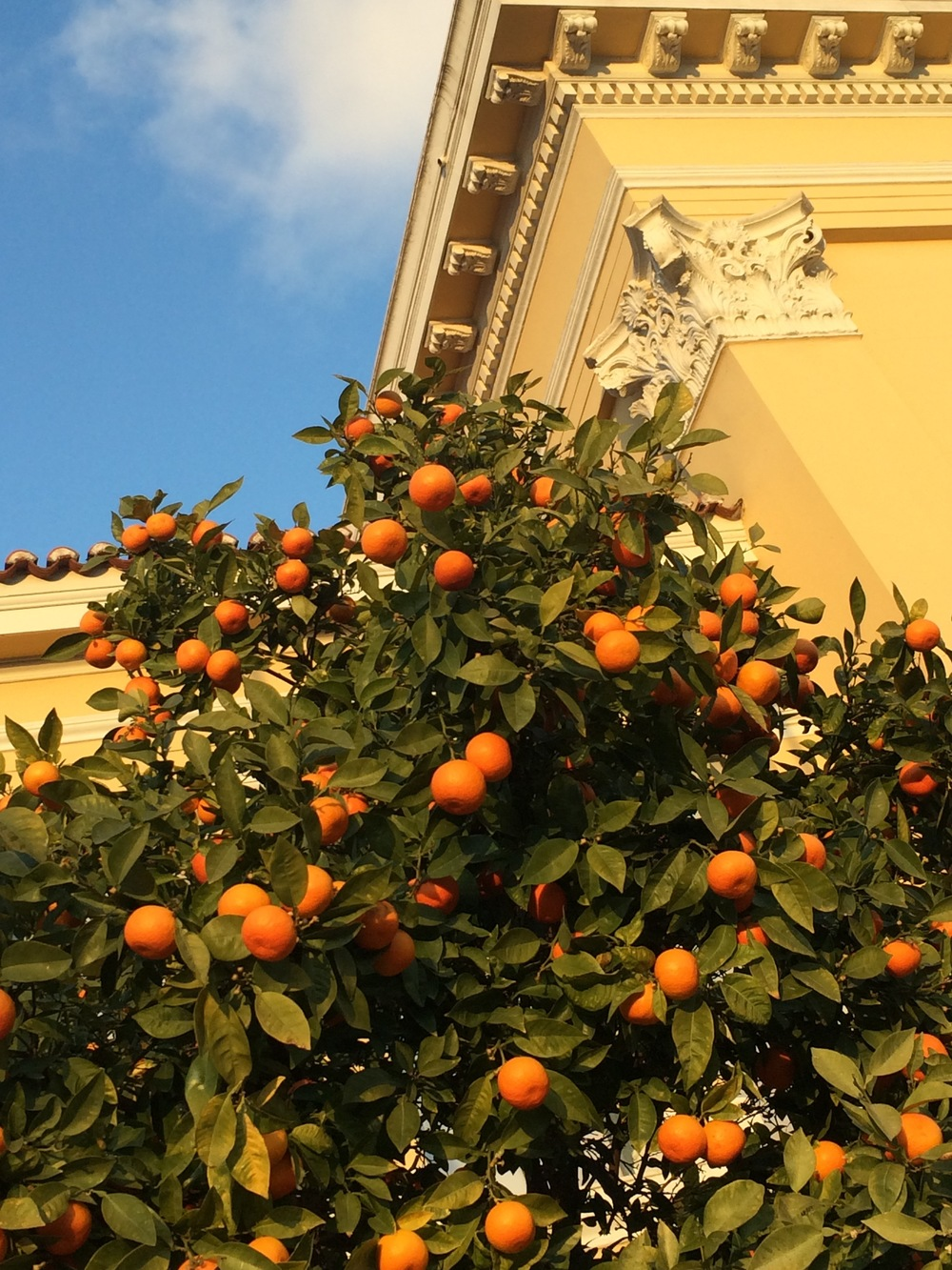 Beautifully ripe oranges in winter weather