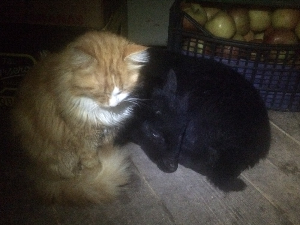 Carolina (the lamb) and her stray cat friend, Garfield.  They sleep at my feet when I cook a pot of soup in the kitchen tent in the wee hours of the morning.