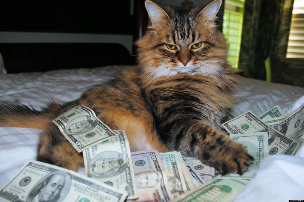 cashcat.jpg