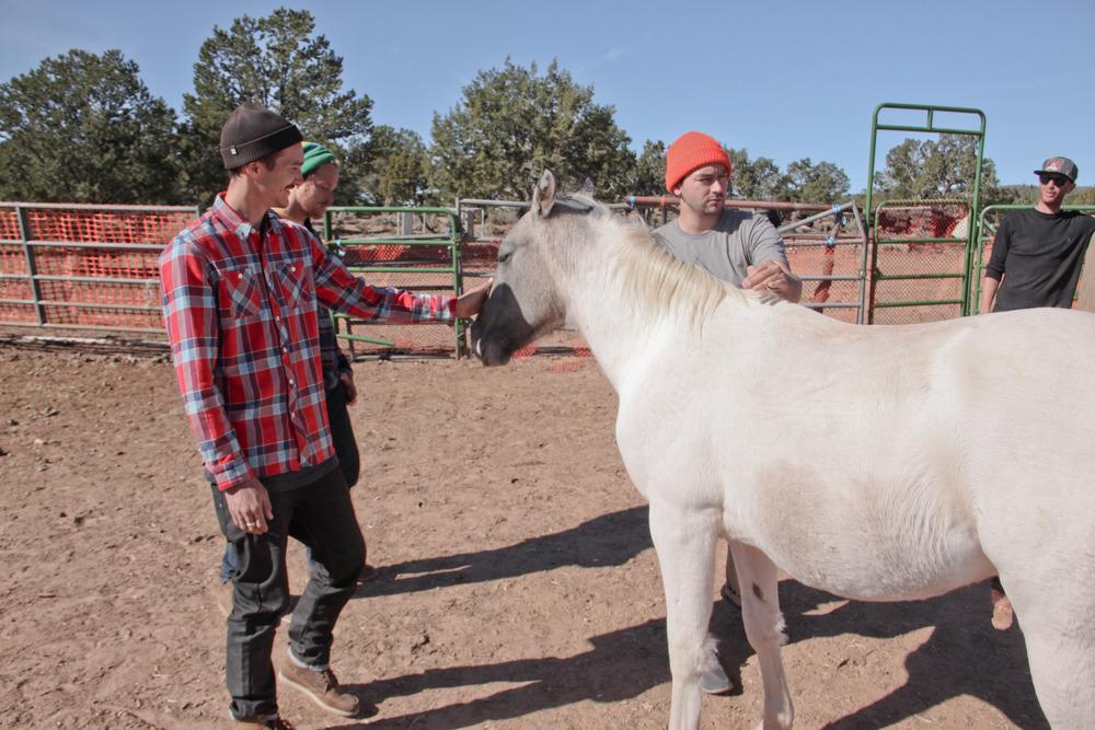 pretty-ponies_8147046579_o.jpg