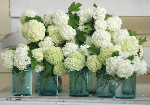 Hydrangea centerpieces — calling it home