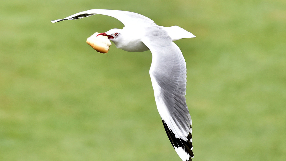 Indoor cricket... a popular option for those who are not fans of the ever so annoying seagull. Photo: Getty Images.