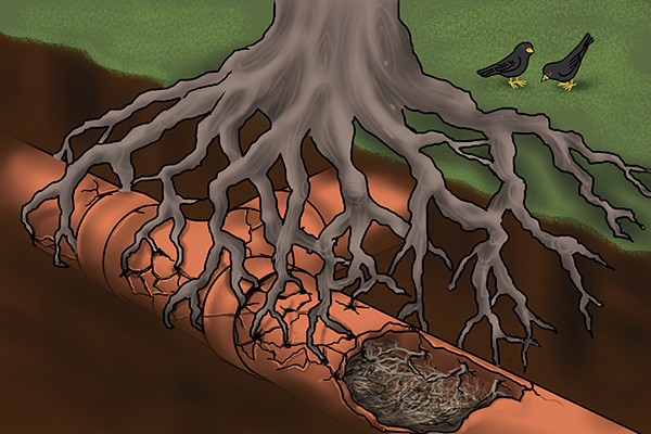 Root-Cause.jpg