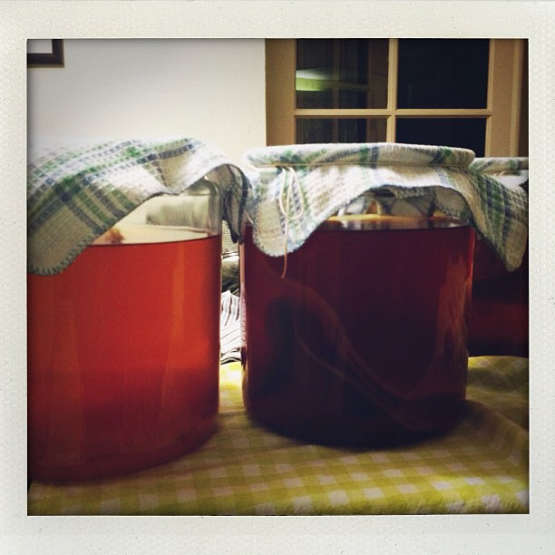 Chris' homebrew kombucha circa 2012-2013