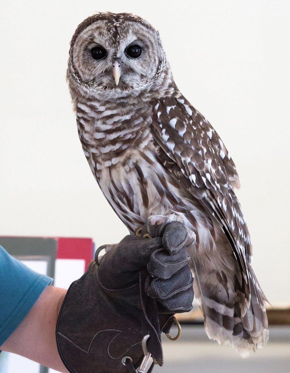 Owl Christina photo 2.jpg