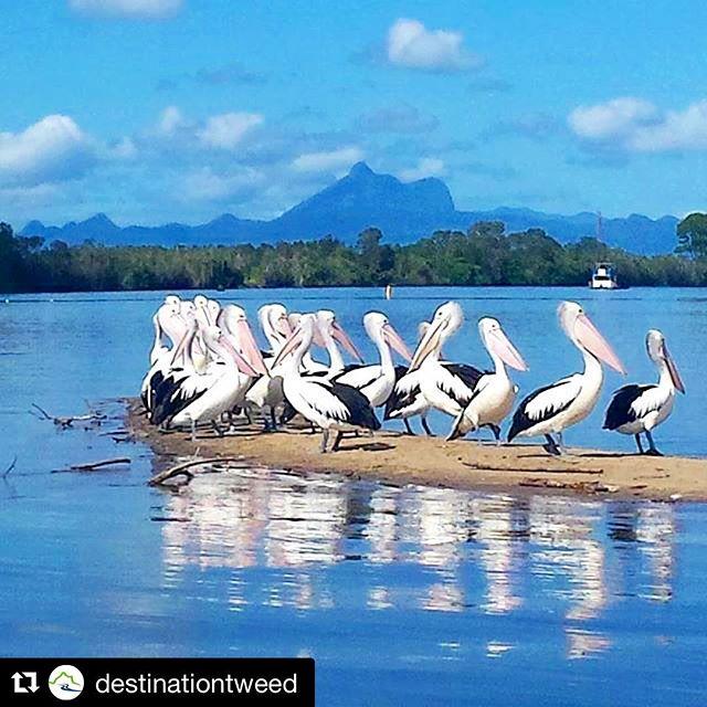 Tweed River has so much to explore ... #kayakhire #suphire #exploresomewherenew #escapethecrowds #tweedriver #tweedheads
