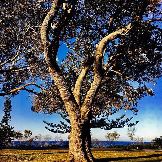 Gorgeous Day ... #suphire #kakayhire #tweedriver #tweedheads Photo Credit @pineapple_girl_chillie