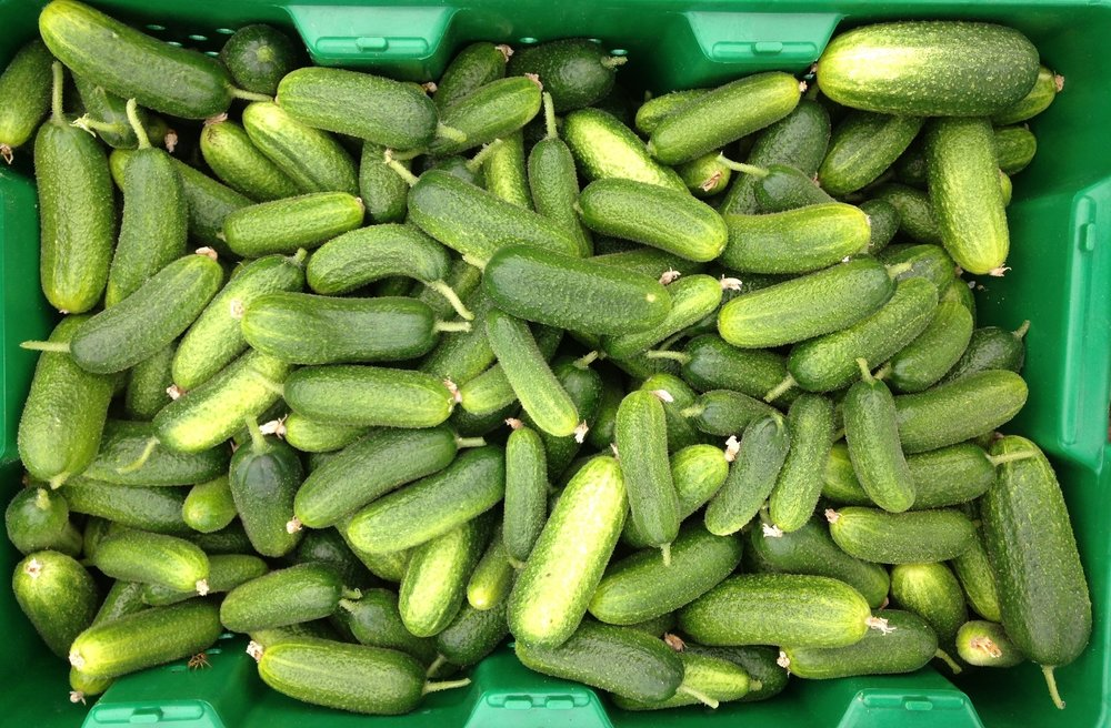 July is pickling time