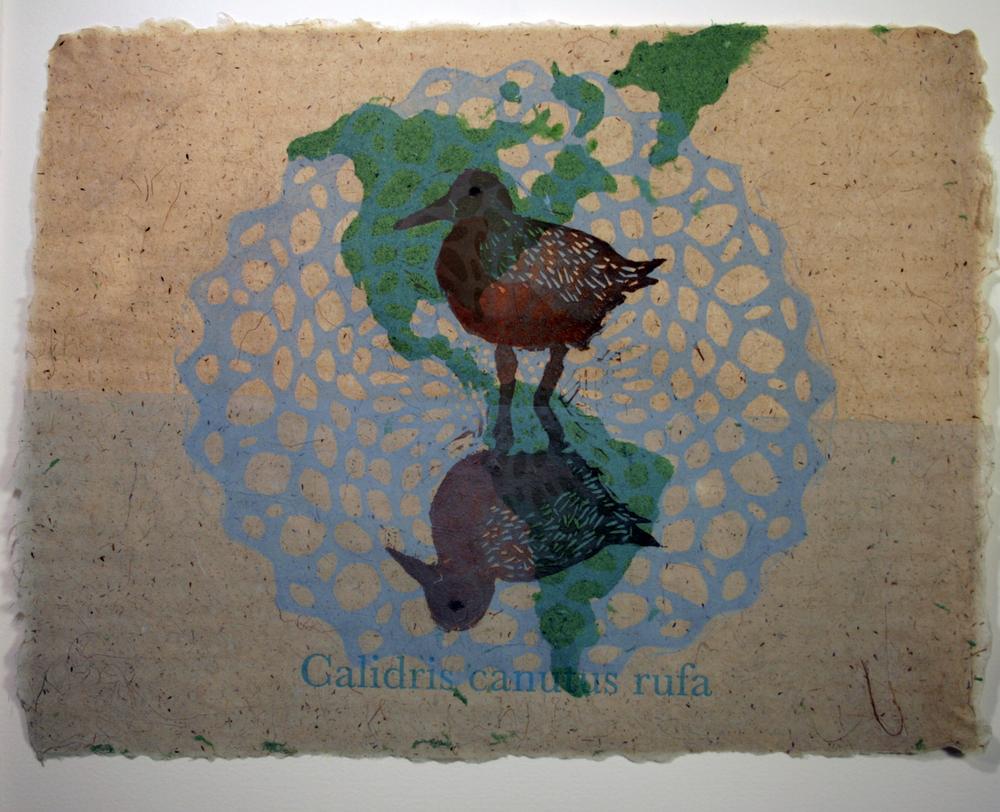 1_Calidris_print.jpg