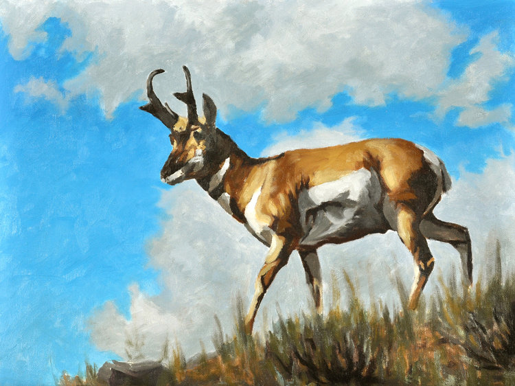 Pronghorn On the Palouse (Sold)