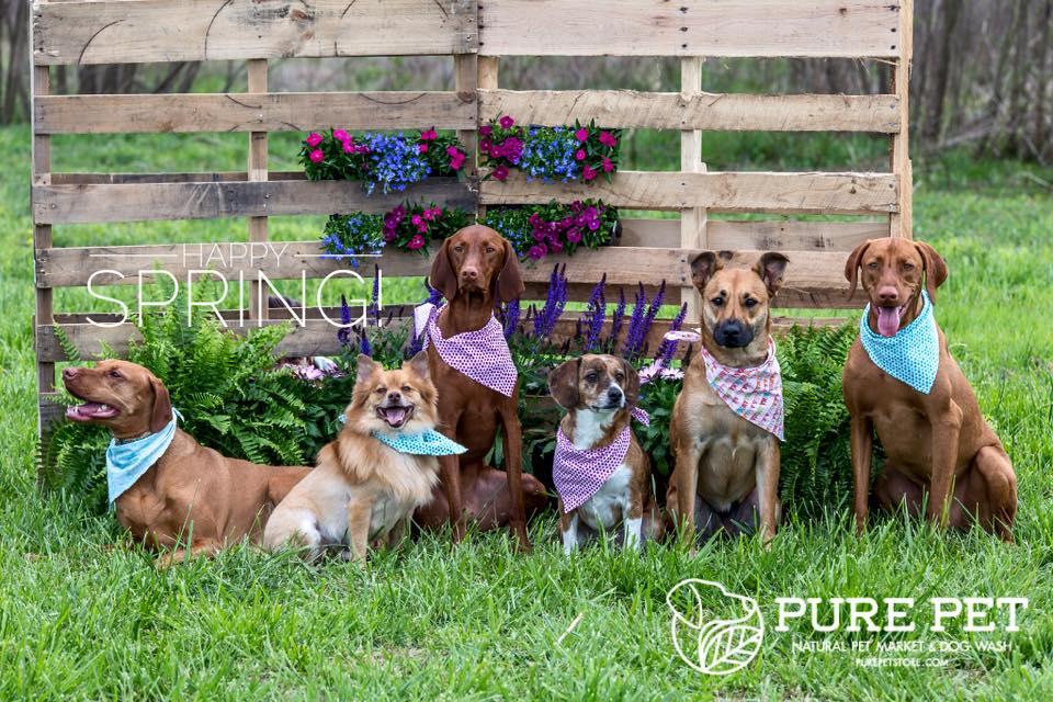 Spring Pure Pet Team