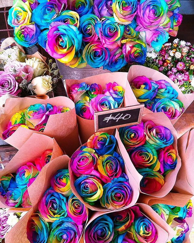 Hoping your day looks just as bright and colorful as these roses 🦄🌹 #fashionbloggerstv#instagood#sydneyfashionblogger#netaporter#fashionbloggers#revolve#revolvesocialclub#revolveclothing#sydneystyle#cassandrachloe#sydneystreetstyle#sydney#ootdmagazine#maybellineau#coloursplash #fashionweekaustralia#mbfwa#mercedesbenzau#magic #flowershow #bloggers#fashion#outfitoftheday#instapicoftheday#streetstyle#ootd#beauty#rainbow#roses🌹