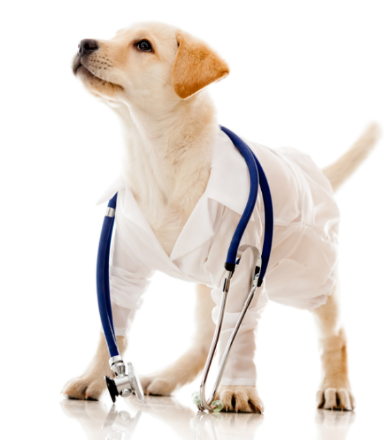 Dog training education for veterinarians in Canada