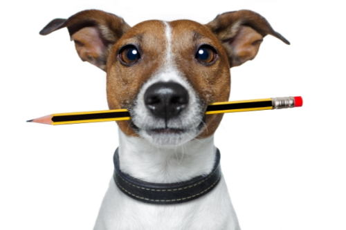 best private dog trainer in Toronto