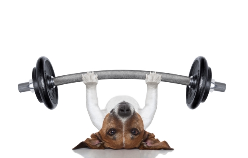 DogLiftingWeights.jpg