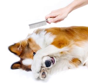 groomingdog.jpeg