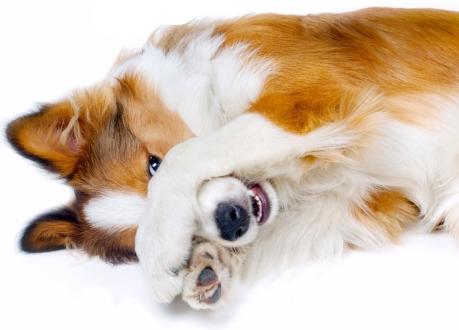DogHidingFromBrush.jpg