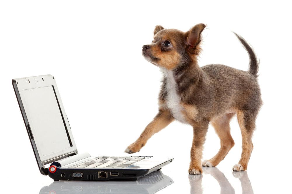 PuppyComputer.jpg