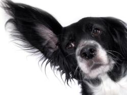 Noixe Phobia BIG ear.jpg