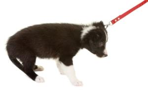 PuppyPullingLeash.jpg