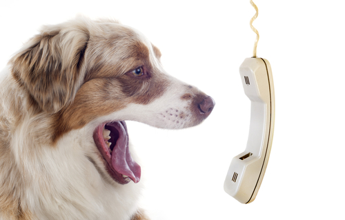 Dog yelling into phone.jpg