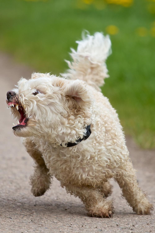 reactivesmalldog.jpg