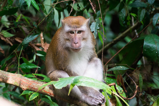 Macaque in Gunung Leuser National Park. Image by Gita Defoe for Photographers Without Borders.