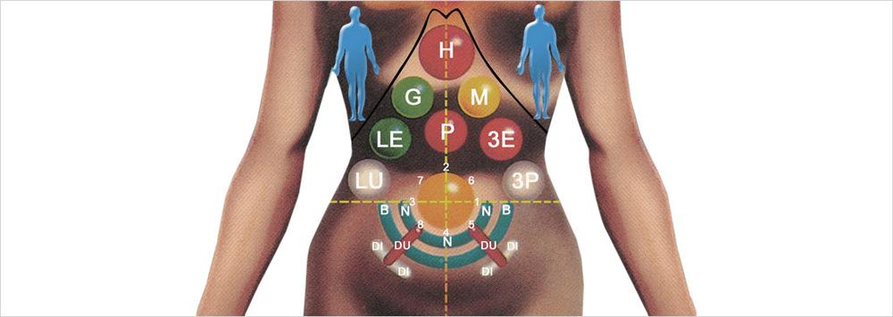 Einige Reflexpunkte, an welchen der Zustand der Organe beeinflusst wird.
