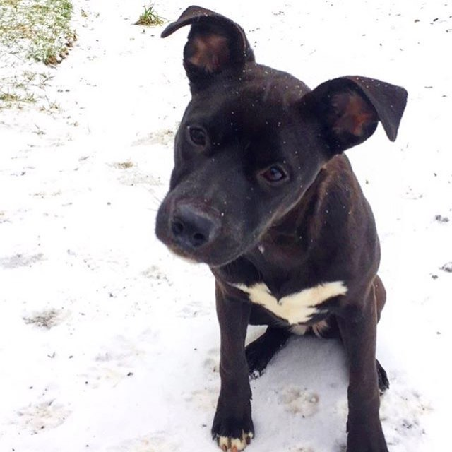 One of our #farmdogs Rory enjoying her first snow fall ❄️ #winteriscoming [PC: @hannahk93]