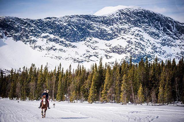 Ett annat sätt att dra på tur. Inte så dumt med sån här dundervy heller! 🐎 Foto @evelinaronnback #kittelfjäll #fjäll #mountains #mountainlife #horsepower #horsebackriding #nature