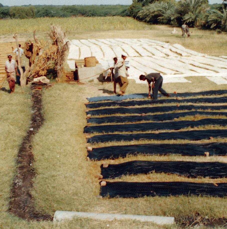 Dyed fabric drying, Dhamadka