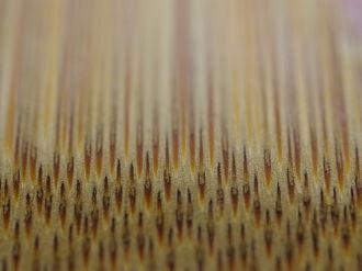Fibre de bambou vue au microscope