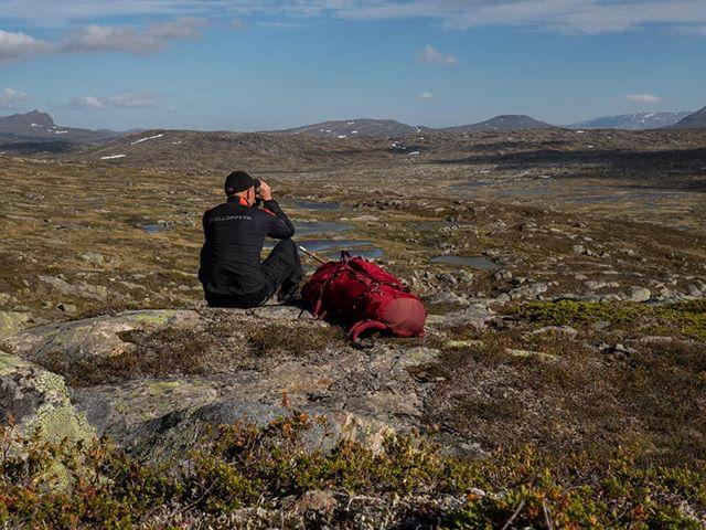 Fjelloppsynet er i gang med sommeroppgaver på fjellrev. 10-12 kjente hi skal besøkes for å dokumentere eventuell yngling. Lite lemen og smågnagere å se, men vi har trua..... #fjellstyreneilierne #fellesfjellrev #fjellstyrene