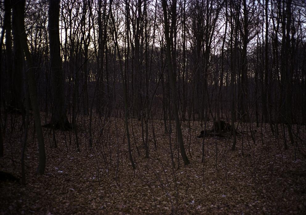 trees near louisiana_forest.jpg