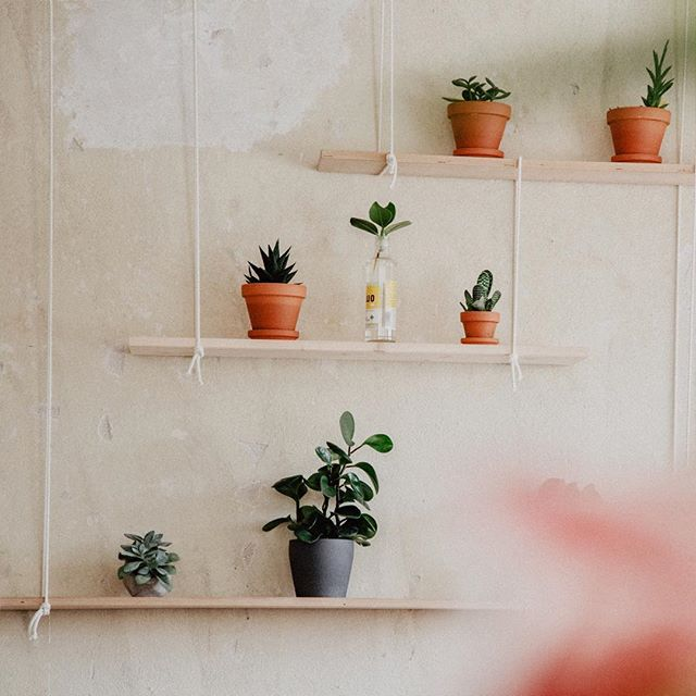 Unsere Pflanzenzucht geht voran. Bald bereit für einen Austausch @editaatmaja #rechenzentrumpotsdam#gogreen #grünesbüro #iloveplants#plants #plantsplantsplants #greenoffice#makeitgreen #officegardening#naturaloffice #ilovemyoffice #büro#working #greenenvironment#hipsteroffice #hipster #hipsterplants#immerschöngießen #office #indoorplant#houseplant #urbanjungle #instaplant#plantaddict #plantlove #botanical#indoorjungle#pflanzenmachenglücklich 📸@annefreitagcom