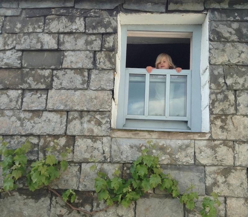02wren-window.jpg